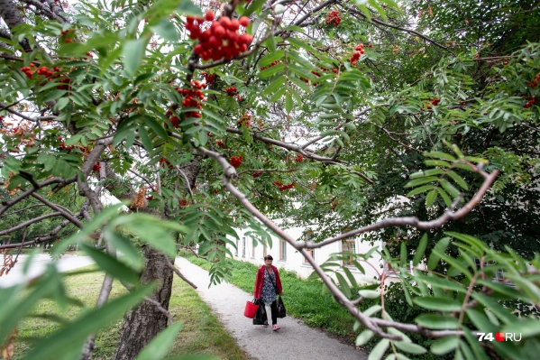 Старые тополя и яркие гроздья рябин — таким запомнится нам Сельмаш