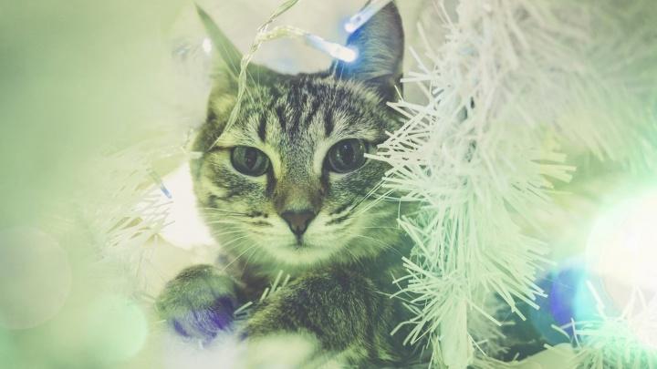 Скажи дождику нет: как украшать елку, если в вашем доме живет котик