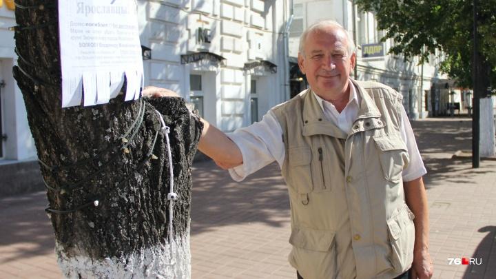 В центре города умирают деревья: чиновники не могут освободить замурованные в плитку липы