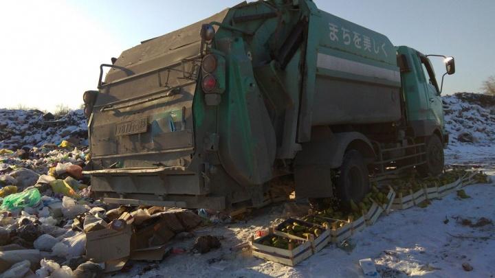 Под Новосибирском мусоровоз раздавил партию запрещённых груш и яблок