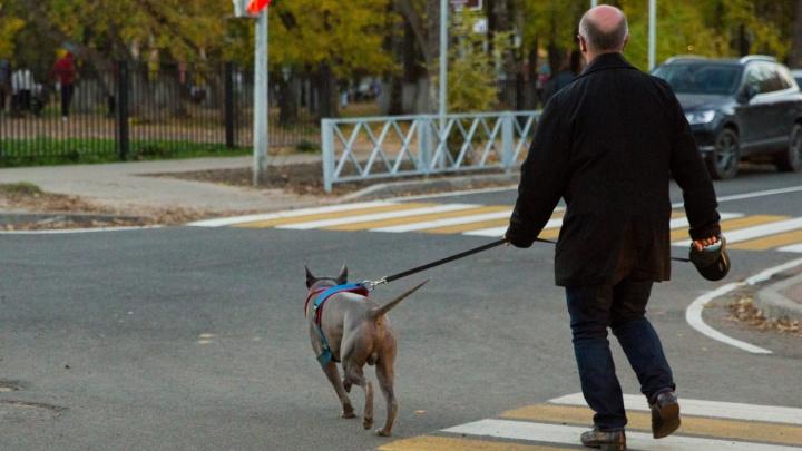 «Начните с себя»: реакция соцсетей на колонку собаковода, уставшей от претензий