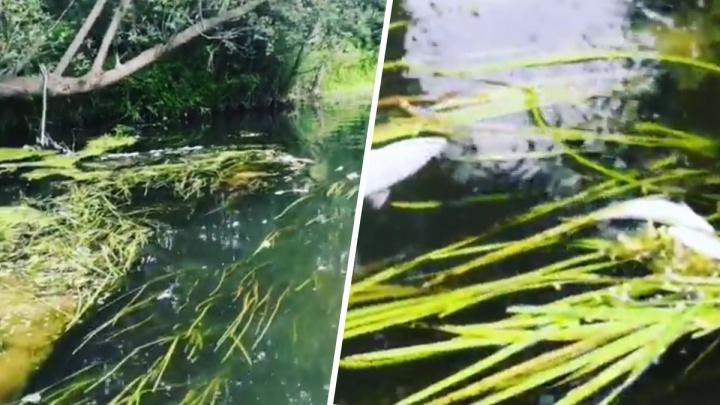 Из-за загрязнения в башкирской реке Изяк массово гибнет рыба