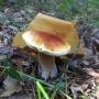 Покажите свои лукошки! Собираем народную карту грибных мест под Тюменью