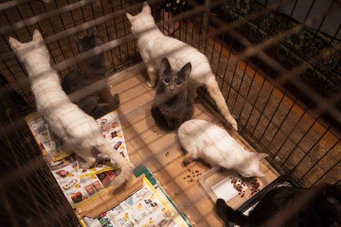 Более 30 кошек жили в обычной квартире новосибирской многоэтажки