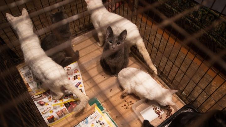 «От увиденного шевелились волосы»: новосибирцы спасли 36 кошек из квартиры пенсионерки