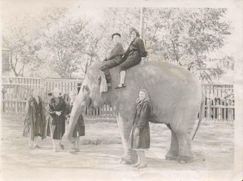 Первые слонихи были почти ручными и катали публику на спине