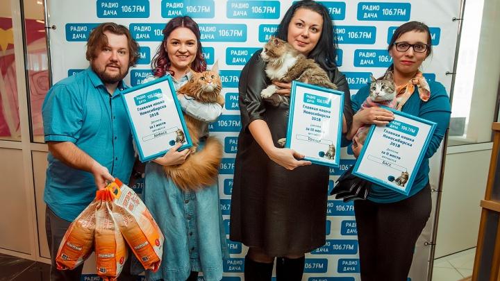 На «Радио Дача» выбрали главную кошку Новосибирска (фото)