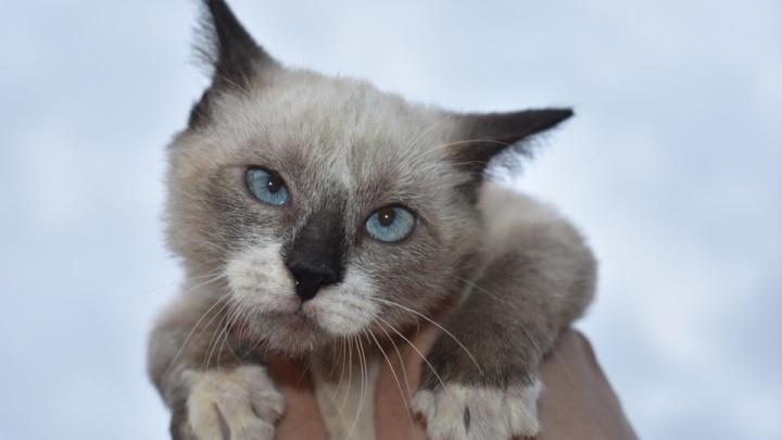 «Девушка шла на крик малыша»: жительница Самары спасла крошечного котенка