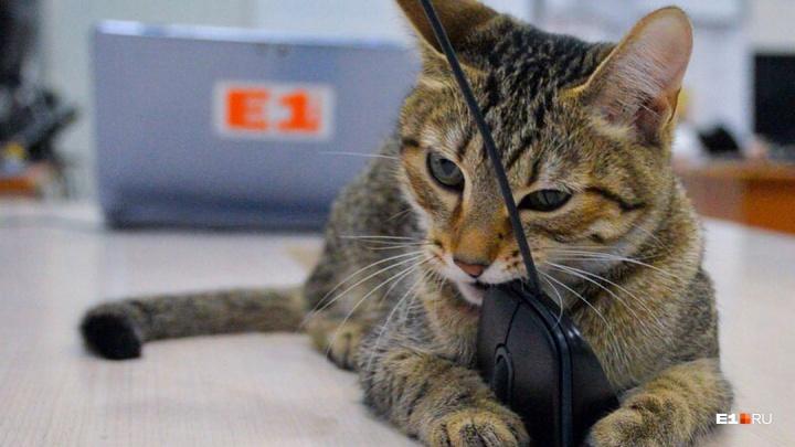 Инструкция E1.RU: почему коту нельзя мочить усы в поилке и вреден ли для собаки корм из супермаркета