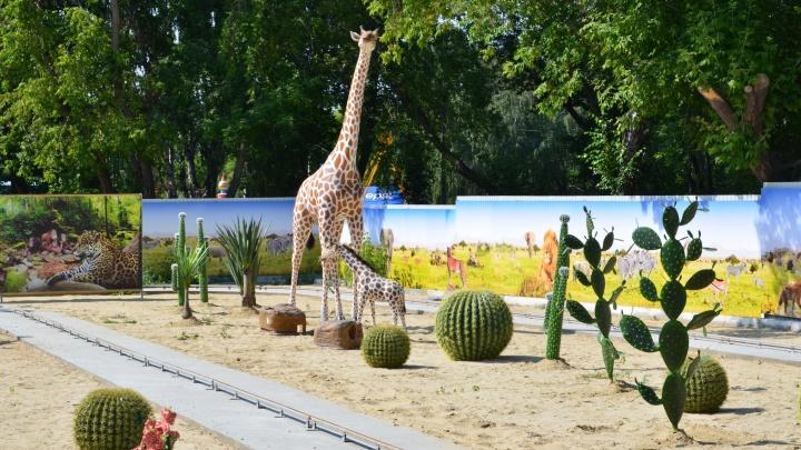 Туда, где рычат львы и гуляют жирафы: совершить путешествие в Африку можно, не покидая Челябинск