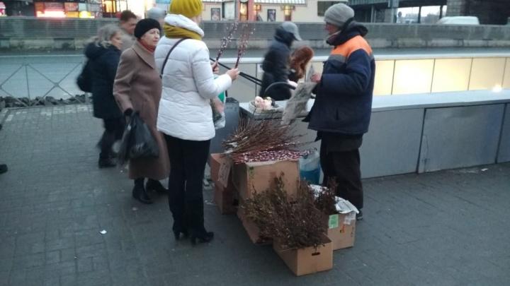 Возле Речного вокзала начали продавать вербу от 50 рублей за пучок