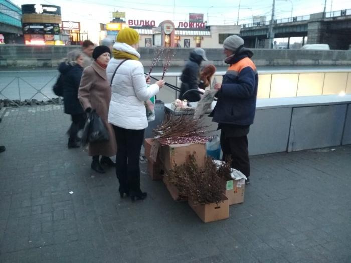 Распустившаяся алтайская верба стоит дороже новосибирской