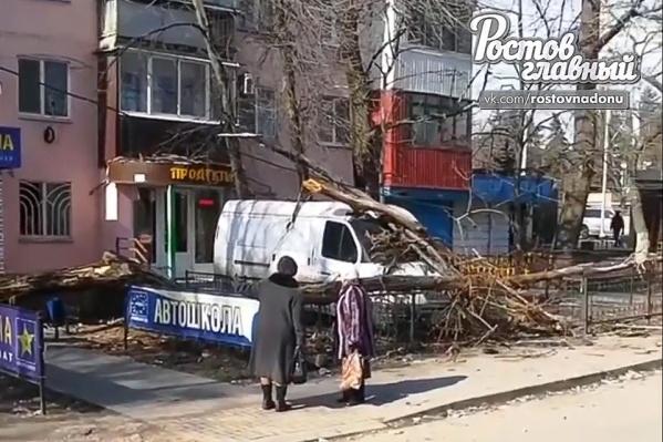 На Западном дерево упало на иномарку