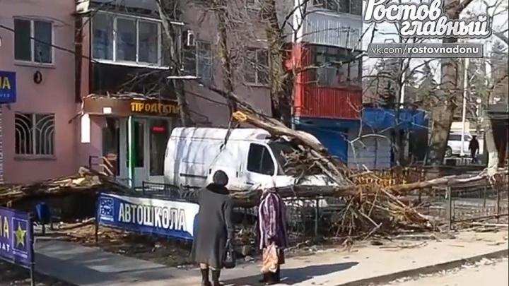 В Ростове упавшие деревья разбили три машины