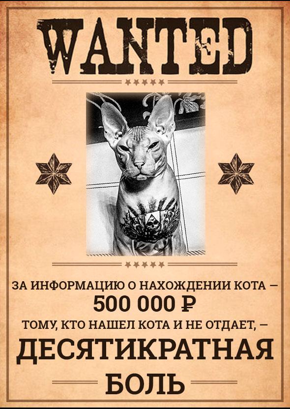 «С удовольствием причиню десятикратную боль!» Боец ММА угрожает тем, кто нашел кота с татуировками