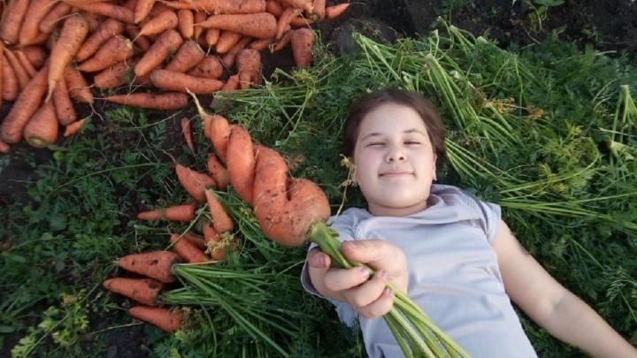 Закрученные морковки и огромные помидоры: читатели E1.RU хвастаются урожаем, собранным на даче