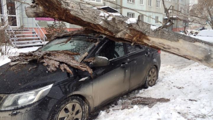 На проспекте Комарова иномарку придавило упавшим деревом