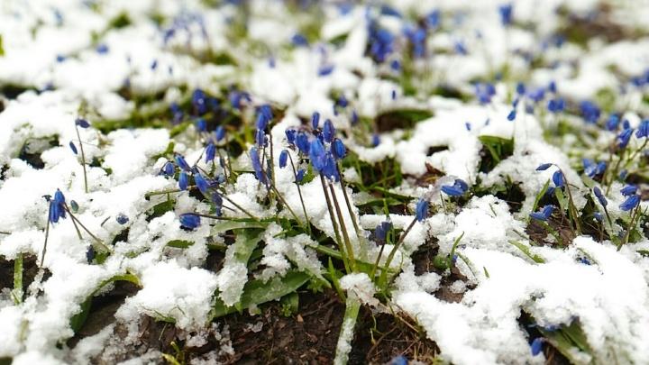 В Волгоградской области Урюпинск завалило снегом: фоторепортаж