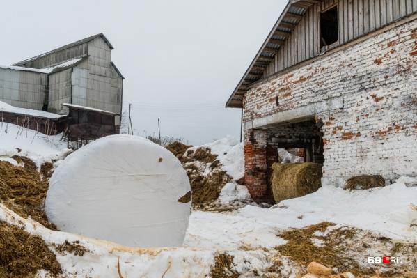 Сельхозкооператив находится в Соликамском районе