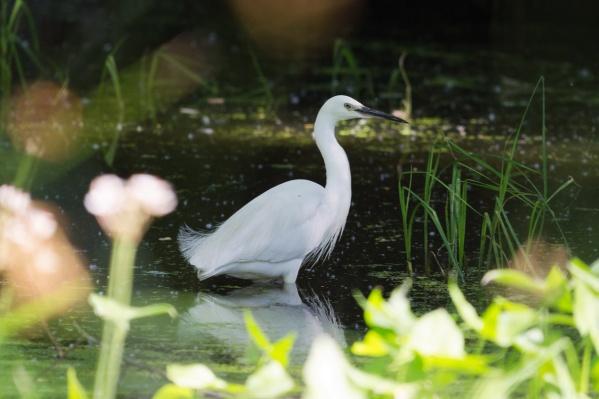 Грациозные птицы не торопятся улетать с «насиженных» мест