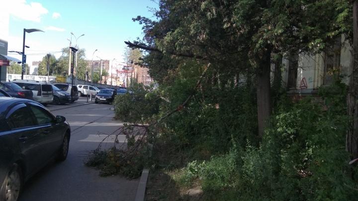 Не стойте под деревьями: МЧС предупреждает об усилении ветра в Самарской области