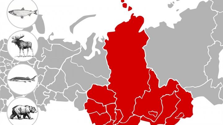 Владимир и Анжелика Бурковские показали миру гастрономическую Сибирь