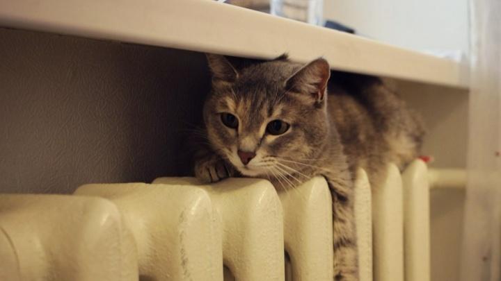 «Это же запахи!»: жителям Самары хотят запретить содержать в квартирах большое количество животных