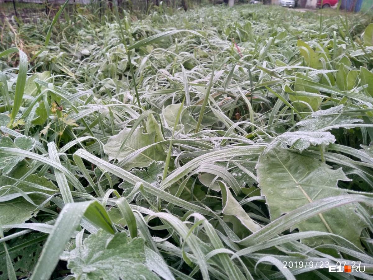 Нынешним утром трава в Большом Истоке покрылась инеем