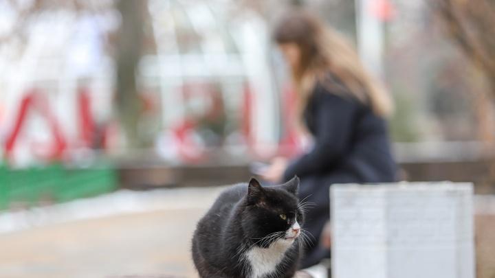 Мрачная скидка: жители Ростова в марте смогут стерилизовать кошек в два раза дешевле