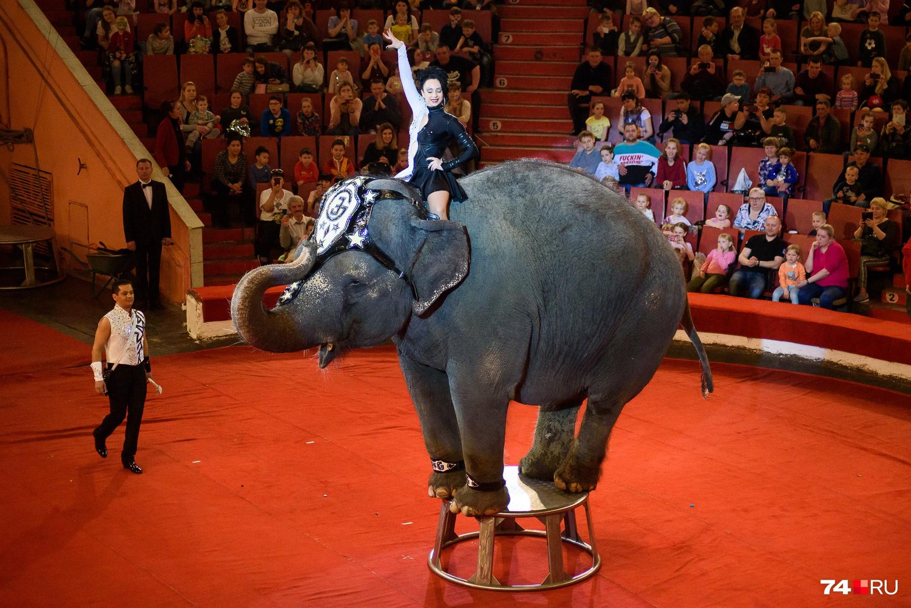 А вот и кульминация шоу — выступление слона!