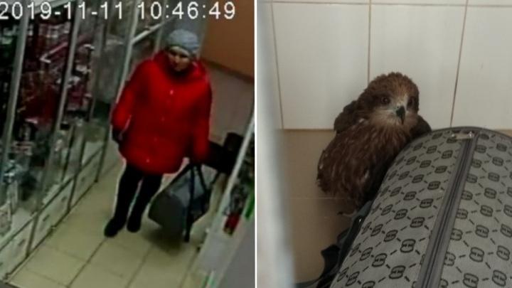 Женщина подкинула ветеринарам коршуна с поломанным крылом и сбежала