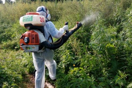 Красноярские полицейские уничтожили 3 га дикой конопли