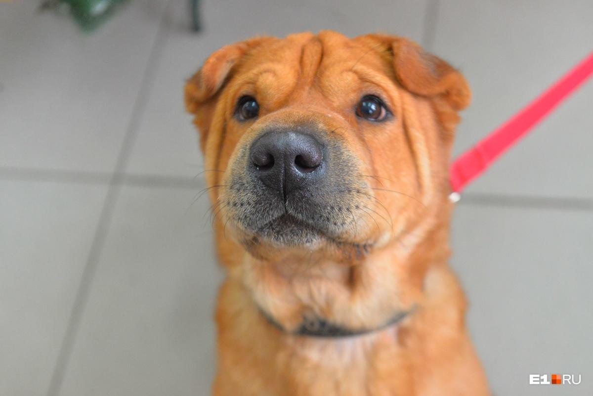 Даже самый милый пёс за границей не будет желанным гостем без ветеринарных документов