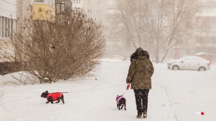 «Плюсовая температура, снег и метель»: синоптики предупредили ярославцев об изменении погоды