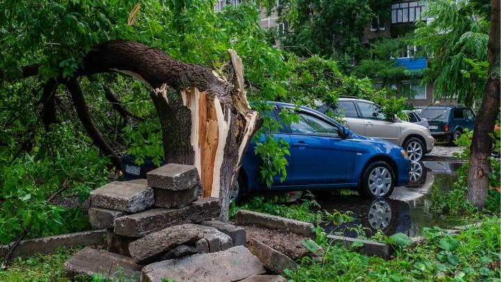 МЧС предупреждает жителей Прикамья о штормовом ветре и дождях