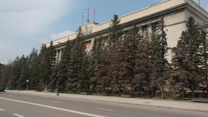 Десяток голубых елей засохли возле здания правительства Красноярского края