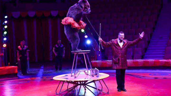 Знаменитые дрессировщики привезли в Екатеринбург 15 медведей, которые боксируют и катаются на великах