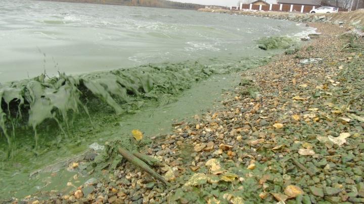 """""""Зелёные волны пучины морской"""": общественник снял на видео пруд, из которого Нижний Тагил берёт воду"""