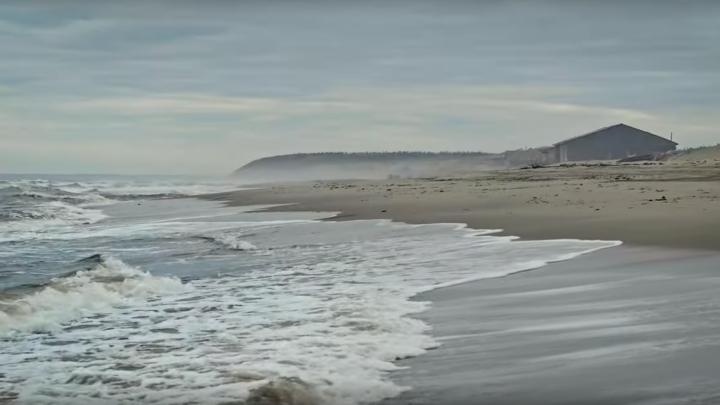 Трапеза белух и лежбище морских зайцев: как месяцами снимали видео про Онегу в две минуты