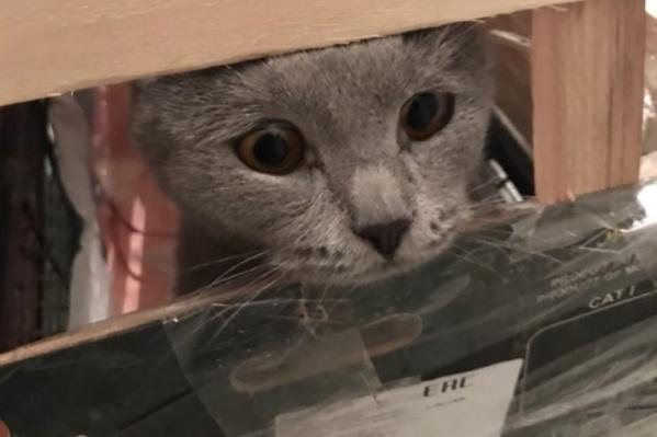 У кота по кличке Эль повреждена лапа