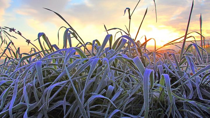 Садоводы, спасайте ваши саженцы: в Башкирию придут заморозки
