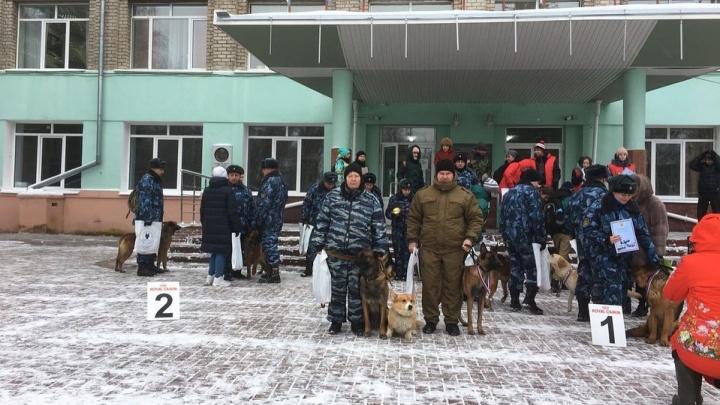 Нижегородский корги-полицейский вошел в тройку лучших служебных собак области