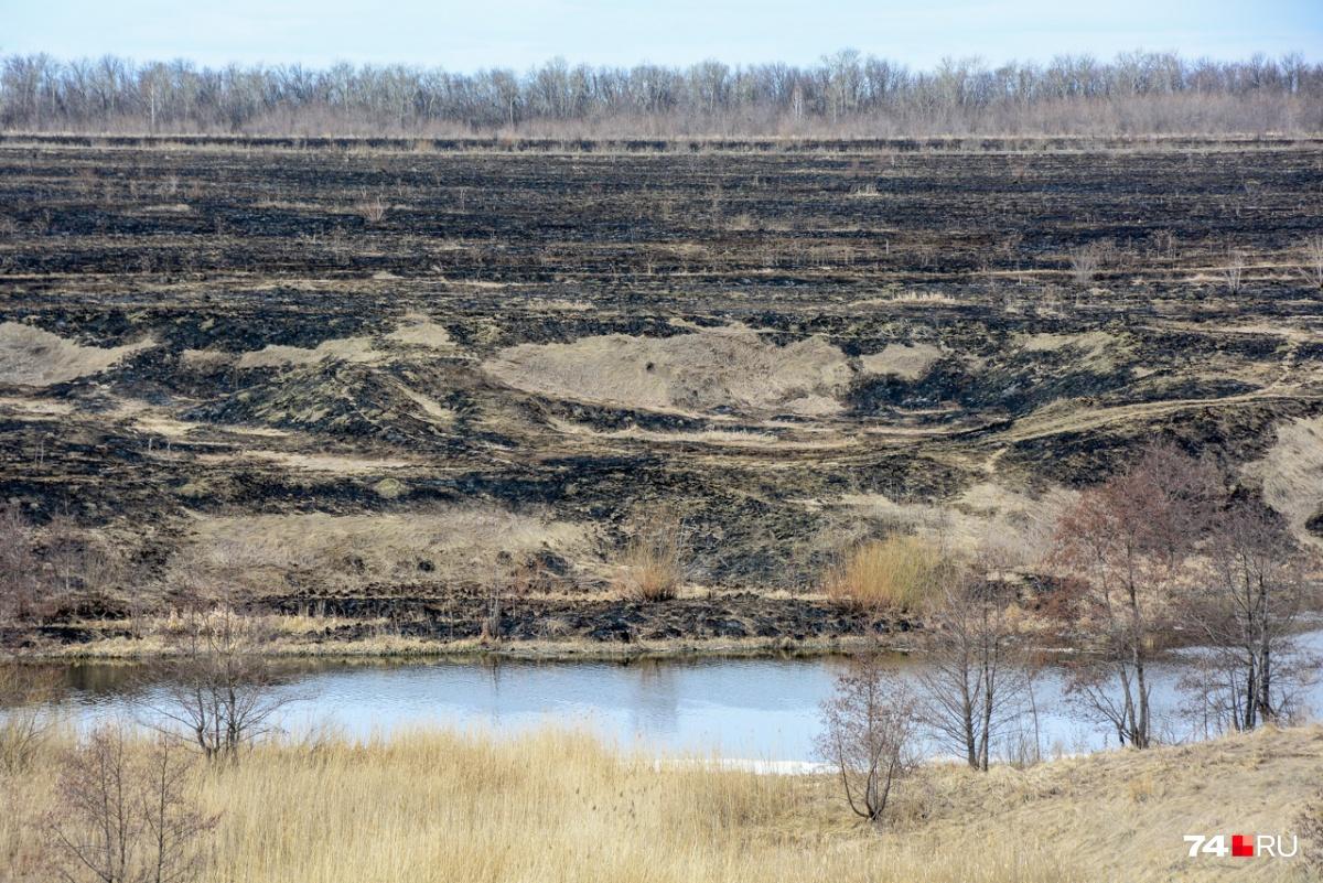 Окрестности Течи — траву выжгли, и стало совсем мрачно