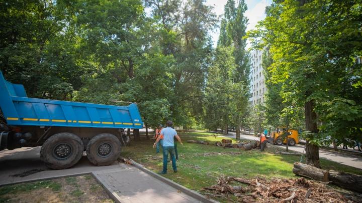 В Ростове из-за обрезки деревьев обесточат часть ЗЖМ