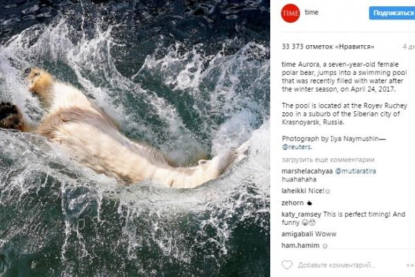Фото красноярской медведицы опубликовало в своем instagram издание Time