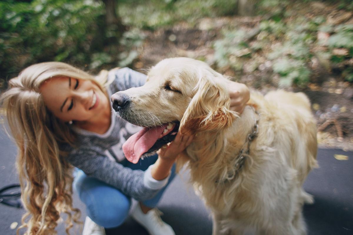 Собачья территория: где гулять с четвероногими