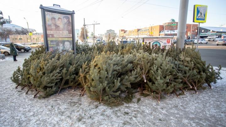 В Челябинске объявили массовый сбор новогодних ёлок. Рассказываем, что сделают с деревьями