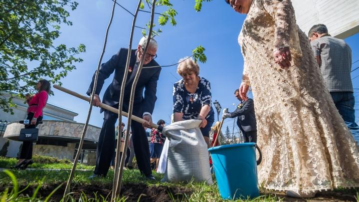 Новосибирцам предложили заплатить по 1,5 тысячи за именные деревья в центре города