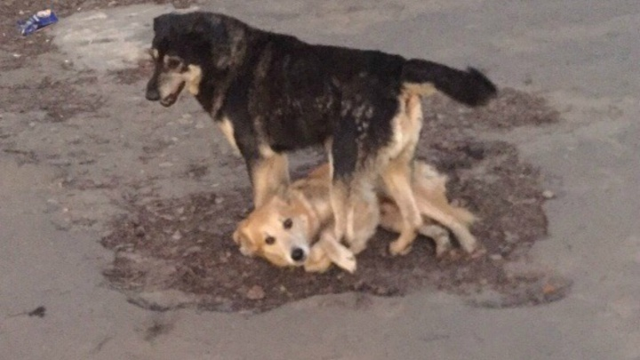 Страшный вой на всю улицу: в Ярославле пёс просит у людей помощи для раненого друга
