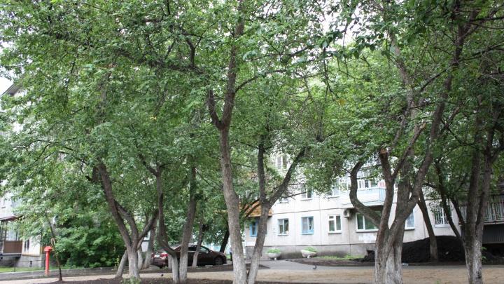 Сделать город-сад: общественники рассказали, какие деревья и как нужно высаживать в Кургане